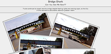 Bridge Shark Web Hub bridgeshark.com